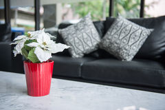Flower with red pot in living room Stock Images