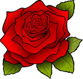 Flower, Red, Rose, Blossom, Nature Stock Images
