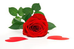 Flower red rose with hearts isolated Royalty Free Stock Image