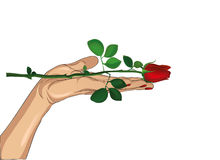Flower red rose in his hand. Hand hands it to you. Present day Royalty Free Stock Photos
