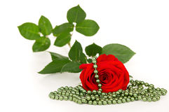 Flower red rose lies and beads Royalty Free Stock Image