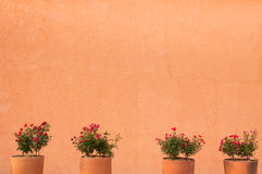 Flower red roses in clay pot on a wall background Stock Image