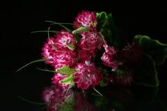 Flower red white Stock Image