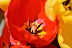 Flower, Red, Yellow, Orange Royalty Free Stock Images
