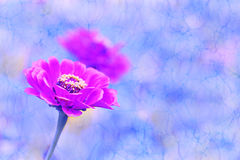 Flower and reflection. Retro background. Royalty Free Stock Photography