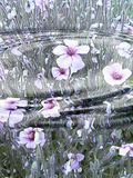 Flower Reflection in Water. A reflection of purple flowers in the ripple of water Stock Photo