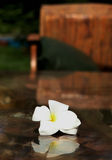 Flower and  reflexion on glass table Stock Images