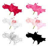Flower rhododendron mountain shrub red,pink, light pink, white , outline and silhouette on a white background vintage bloom four. Vector illustration editable Stock Photography