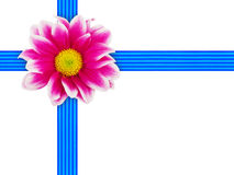 Flower and ribbon Stock Photo