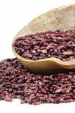 Flower rice bean Royalty Free Stock Photos