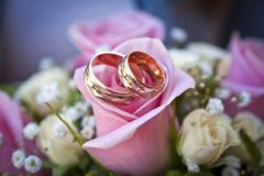 Engagement rings on pink rose royalty free stock image
