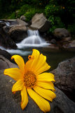 Flower in the river. Alone Royalty Free Stock Photo