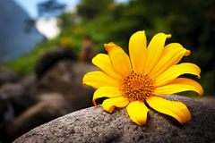 Flower in the river. Alone Stock Photos