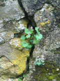 Flower in the rock. Green flower in rock with yellow moss Stock Photo