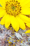 Flower and rock in the spring nature Stock Photos