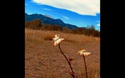 Flower. Rocky mountains Colorado autumn Royalty Free Stock Image