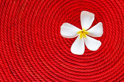 Flower on roll red rope. Lan thom flower on roll red rope Royalty Free Stock Photo