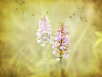 Flower, romantic background, textured. Stock Photos