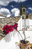 Flower at a roof Stock Images
