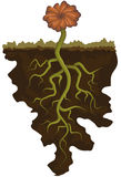 Flower with roots. Illustration of flower with deep roots Stock Photos