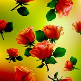 Flower, rose, blossom, bloom, floral, background, Royalty Free Stock Photos