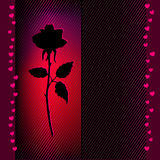 Flower rose card Royalty Free Stock Images