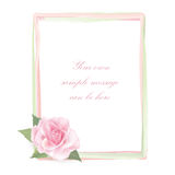 Flower Rose frame isolated on white background. Floral  decor. Royalty Free Stock Photography