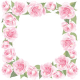 Flower Rose frame  on white background. Floral  decor. Flower decor. Flower rose background . Floral frame with pink roses Royalty Free Stock Photography