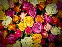 Flower, Rose, Garden Roses, Rose Family Royalty Free Stock Photography
