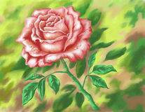 Flower rose, hand-draw painting Stock Photo