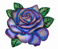 A flower rose. Illustration rose, made with color pencils and watercolor. white background Royalty Free Stock Photography