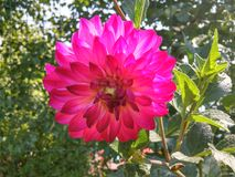 Flower. Rose magic Stock Photography