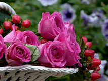 Flower, Rose, Pink, Flower Bowl Stock Photos