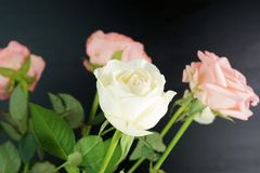 Flower, Rose, Rose Family, Flowering Plant stock images