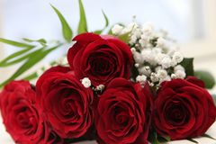 Flower, Rose, Rose Family, Garden Roses Stock Photos