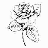 Flower Rose, sketch, painting. Hand drawing. White bud, petals, stem and leaves. Monochrome, Black and white illustration. Decorat Royalty Free Stock Image