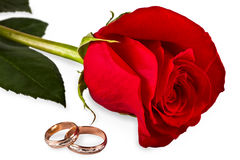 Flower a rose, two wedding rings Stock Photo