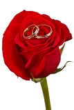 Flower a rose, two wedding rings Royalty Free Stock Photo