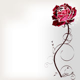 Flower rose. Rose on a white background with a long stem Stock Photography