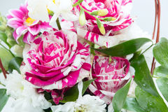 Flower roses. With green leaf and petals, pink color royalty free stock photos