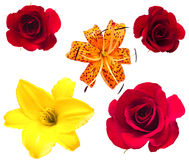 A flower of roses and lily. Stock Image