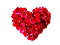 Roses petal Royalty Free Stock Photo