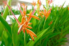Flower in row. Bird of paradise at car park in the morning Royalty Free Stock Image