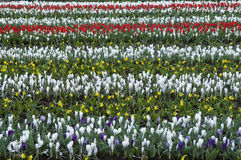Flower rows Stock Photography
