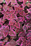 Flower Rug. Red, purple and pink plants rug Royalty Free Stock Image