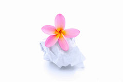 Flower on rumpled paper ball royalty free stock image