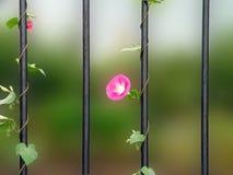 Flower runner on a rail Stock Image