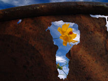 Flower and rusty garbage can. Yellow flower viewed through a hole in a rusty garbage can with a cloudy blue sky in the background Stock Images