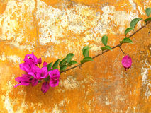 Flower on a rusty wall. Close up stock images