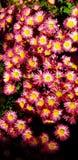 Flower& x27; s fotografía de archivo libre de regalías